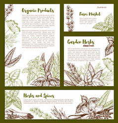 Organic spices and herbs seasonings sketch vector