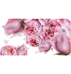 peony flowers watercolor background vector image