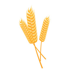 wheat spikelets isolated vector image