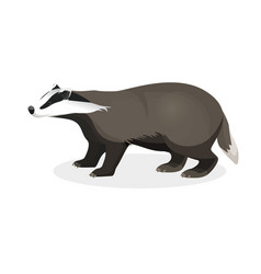 badger on short legs in realistic style isolated vector image vector image