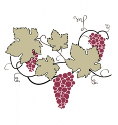 decorative grape vine vector image vector image