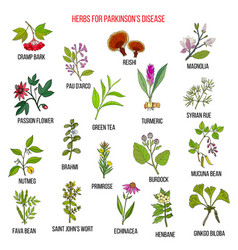 best natural herbs for parkinson disease vector image