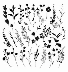 Black drawn herbs plants and flowers vector