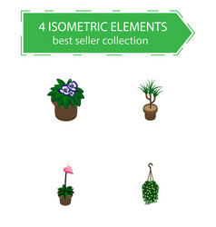 isometric plant set of flower herb hanging and vector image