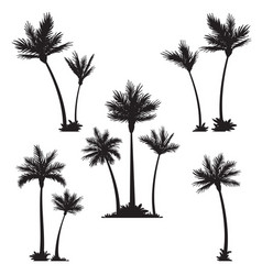 Tropical palm trees black silhouettes vector