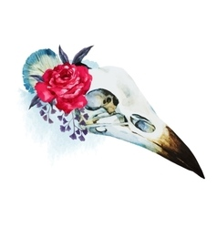 Watercolor bird skull vector image