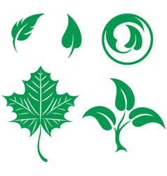 Collection leaves vector image