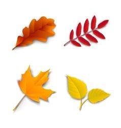 Autumn oak maple ash birch leaves vector image