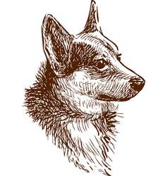 A portrait a corgi dog vector