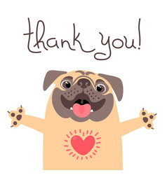 Cute dog says thank you pug with heart full of vector