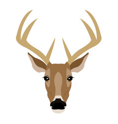 hand drawn graphic sketch of a deer vector image