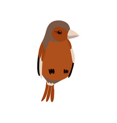 little sparrow bird cute birdie home pet vector image