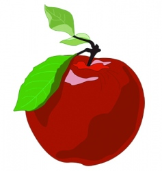 apple drawing vector image vector image