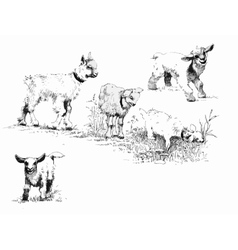 set of black and white ink hand drawn goatlings vector image