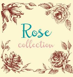 rose design elements collection floral corner vector image