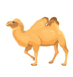 camel isolated vector image