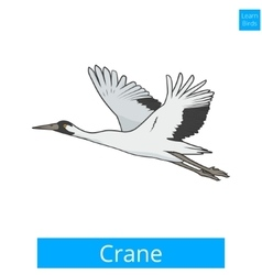 Crane learn birds educational game vector image