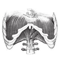 Diaphragm viewed from front vintage vector
