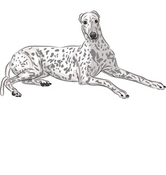 Whippet vector image vector image