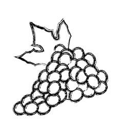 grape bunch fruit leaf food design skecth vector image