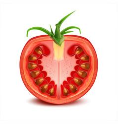 A slice of tomato vector