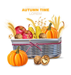 autumn basket withpumpkins and fruits vector image
