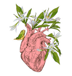 Human heart with flowers vector