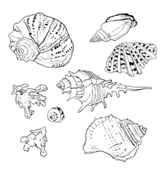 Set of hand drawn seashells vector