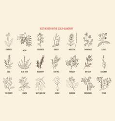 Best medicinal herbs for scalp-dandruff vector