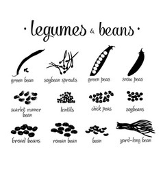black and white legumes beans set vector image