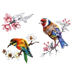 Bright birds on branches with flowers ink hand vector image