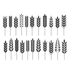 Grain cereal icon shape black vector