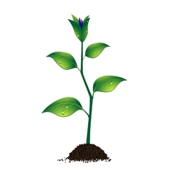 a beautiful plant vector image