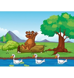 A smiling bear and ducks vector