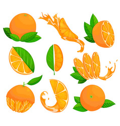 collection fresh ripe oranges set with whole vector image