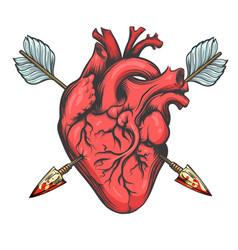 heart pierced two arrows vector image