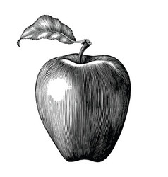Apple fruit drawing vintage clip art isolated vector