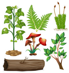 different types of plants vector image