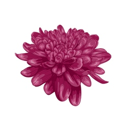 Purple dahlia with the effect of a watercolor draw vector