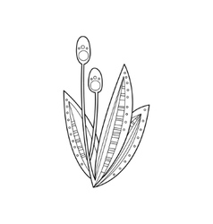 Swamp Plant Hand Drawn vector