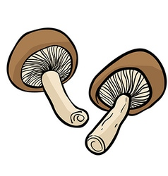 two mushrooms vector image