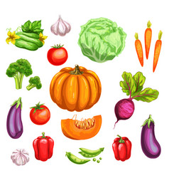 Vegetable watercolor set of fresh organic veggies vector