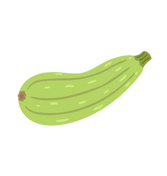 zucchini icon in flat style vector image
