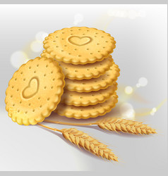 Biscuit cookies or whole wheat cracker vector