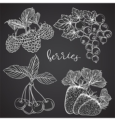 collection of berries on chalkboard vector image