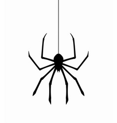 hanging spider on web thread vector image