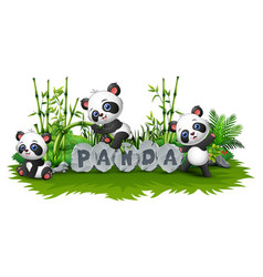 panda is playing together in garden vector image