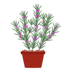 Rosemary tree in pot vector