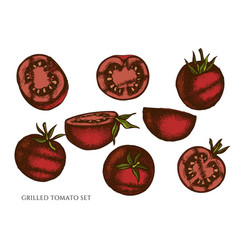 Set hand drawn colored grilled tomato vector