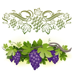 ripe grapes on the vine vector image vector image